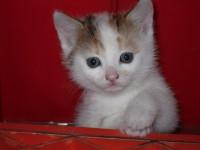 cat-baby-83316_960_720